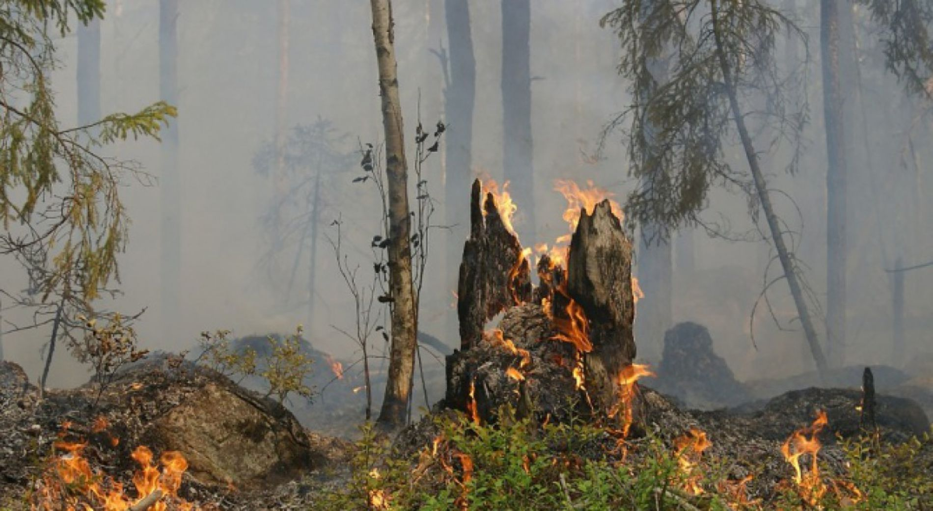 Fires in Sliven district are controlled
